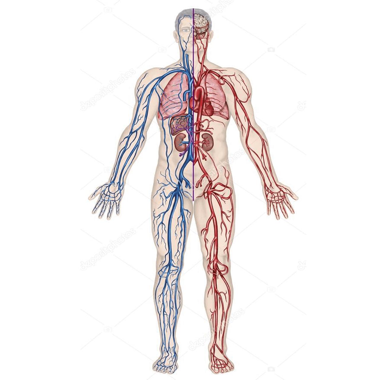 Khí huyết trong cơ thể